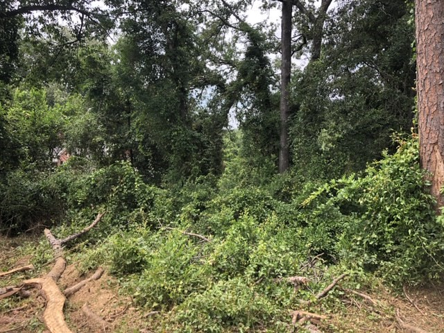 Land Clearing West Columbia SC