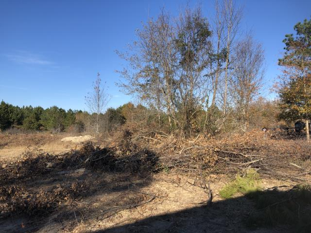 Retention Pond Cleanup at Specialty Woodworks, Lexington SC -Before